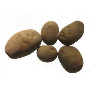 Kartoffeln Nicola,  festkochend