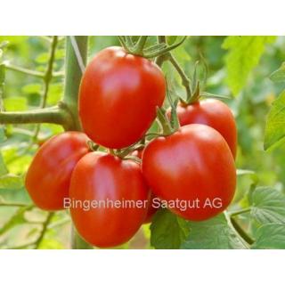 Tomatenpflanze Quadro F