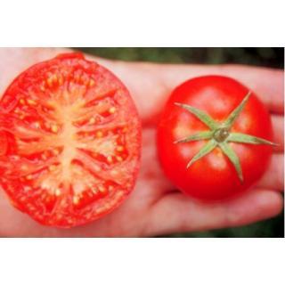 Balkon-Tomatenpflanze Silbertanne