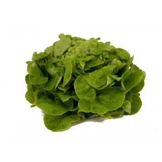 Salat der Woche