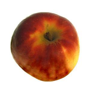"Apfel ""Antares"""