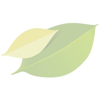 Bambuszahnbürste für Erwachsene, medium